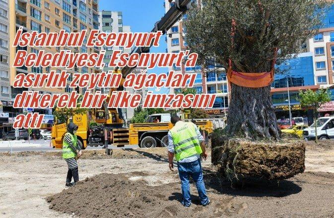 İstanbul Esenyurt Belediyesi,  Esenyurt'a asırlık zeytin ağacı dikerek bir ilke imzasını attı